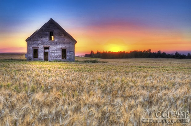 Caryn Esplin - Harvest of Color - Lonely Old House - Wheat