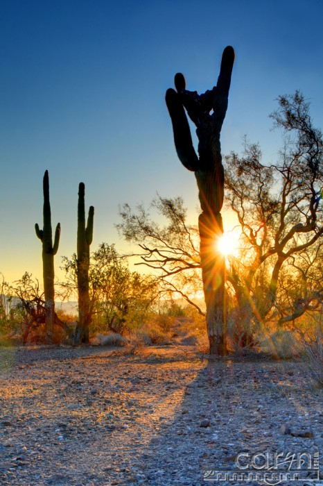 Caryn Esplin - Arizona Sunburst - Quartzsite, Arizona