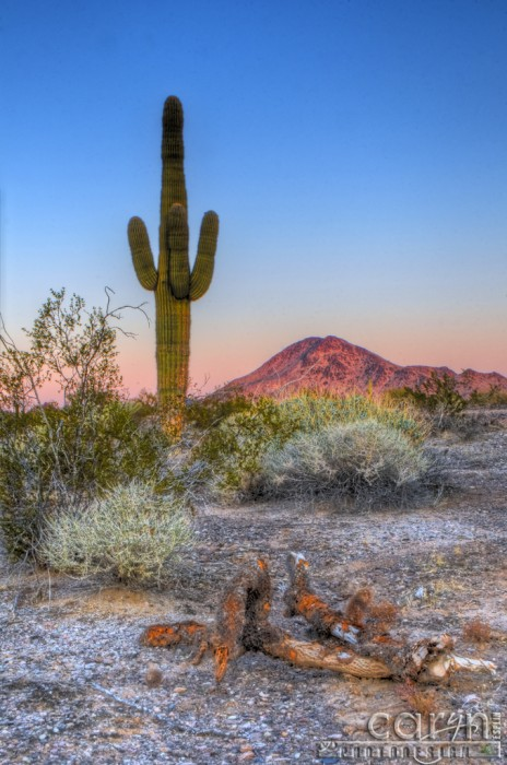 Caryn Esplin - Desert First Light - Quartzsite, Arizona
