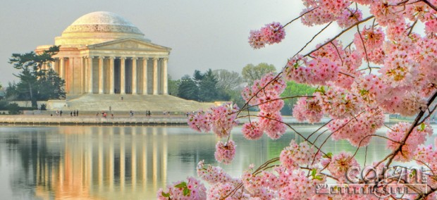 100th Anniversary - Cherry Blossom Festival - Washington D.C. - Tidal Basin - Jefferson MemorialCaryn Esplin
