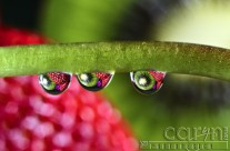 Kiwi Eyes – Macro Water Drop Photography
