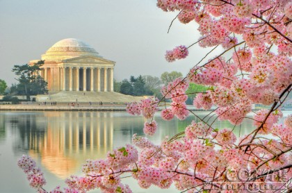 Cherry Blossom - Jefferson Memorial - Reflection - Washington D.C. Tidal Basin - Caryn Esplin