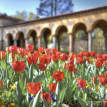 National FranciscanMonastery - Tulips - Washington D.C. - Caryn Esplin