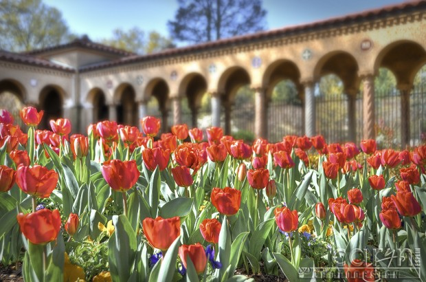 National Franciscan Monastery - Tulips - Washington D.C. - Caryn Esplin