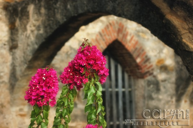 Pink flowers in the archway - San Juan Mission - San Antonion, Texas - Caryn Esplin