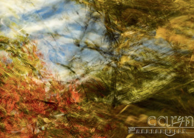 Autumn Abstract Splash of Color!
