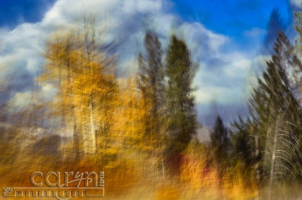 Autumn Abstract Aspens - Fall Spalsh of Color - Palisades, ID - Jackson WY - Caryn Esplin