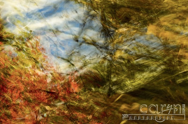 Autumn Abstract - Fall Spalsh of Color - Palisades, ID - Jackson WY - Caryn Esplin