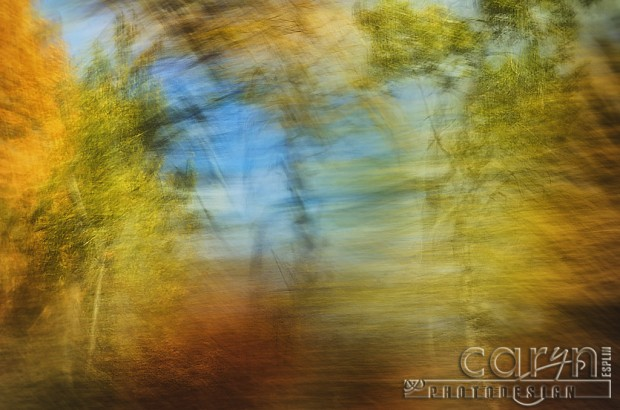 Car Window Autumn Abstract - Fall Spalsh of Color - Palisades, ID - Jackson WY - Caryn Esplin