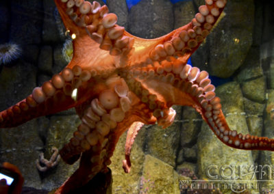 Monterey Bay Aquarium – A must see!