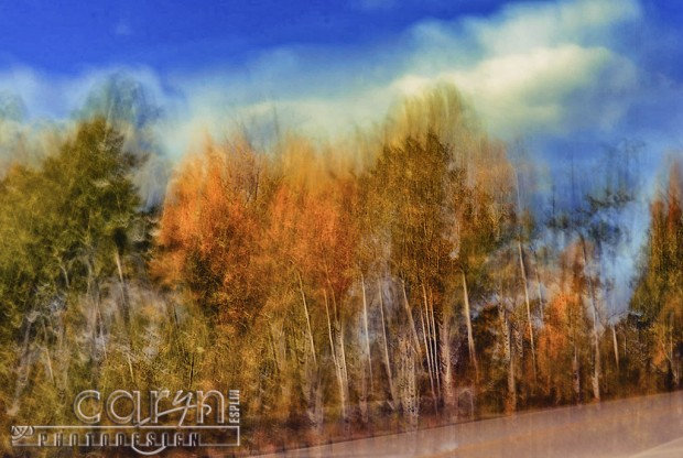 Roadside Autumn Abstract - Fall Spalsh of Color - Palisades, ID - Jackson WY - Caryn Esplin