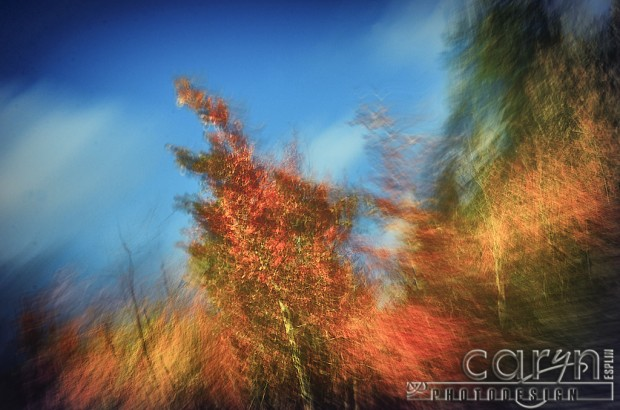 Autumn Sky Abstract - Fall Spalsh of Color - Palisades, ID - Jackson WY - Caryn Esplin