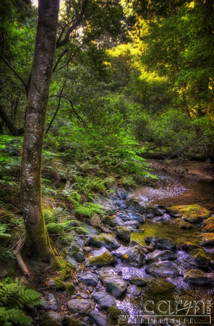 Caryn Esplin - Muir Woods National Monument - California Redwoods - Stream - San Francisco