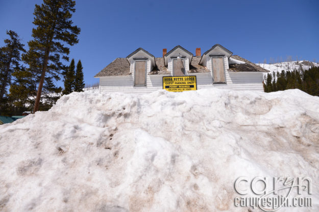CarynEsplin-CookeCitySnowbank-YellowstoneNationalPark