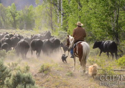 Idaho Cattle Drive: A Fortuitous Morning!