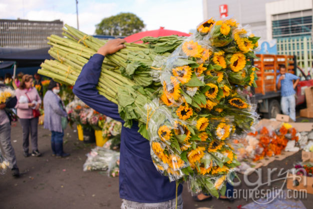 CarynEsplin-Bogota-Colombia-Paloquemao-Market-Exotic-Tropical-Flowers-Sunflowers