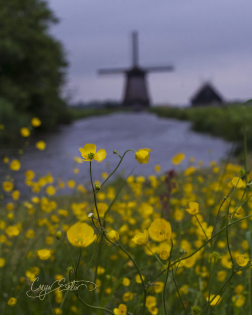 Dutch Windmills - Holland - Netherlands - Caryn Esplin - Canal
