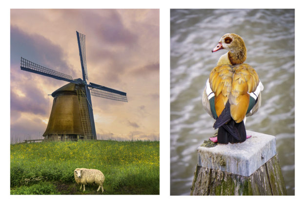 Enlighten Tour- Caryn Esplin – Europe in 40 days – People, Culture, Landscapes of Europe, Tour the Netherlands